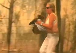 Incendi in Australia: il koala ustionato dalle fiamme salvato da una donna L'animale è stato recuperato da una donna, che lo ha coperto con il proprio vestito e poi l'ha rinfrescato con l'acqua - CorriereTV