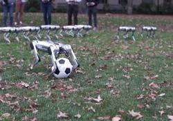 L'allenamento dei cani-robot: l'ultima invenzione tecnologica del Mit Stretching sincronizzato e capriole all'indietro, ma quando saltano nascosti dalle foglie sono davvero incredibili - Dalla Rete