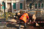 La strage di alberi per le strade, Messina fa la conta dei danni - Foto