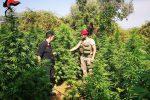 Scoperta una piantagione di marijuana a Sant'Ilario dello Jonio, due arresti
