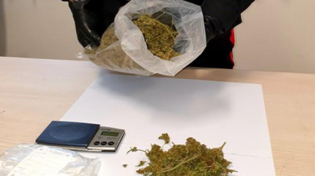 droga, lamezia, marijuana, Catanzaro, Calabria, Cronaca