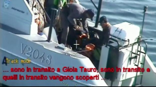 'ndrangheta, operazione magma, Domenico Bellocco, francesco corrao, Umberto Bellocco, Reggio, Calabria, Cronaca