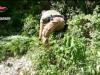 Piantagioni di droga nel Reggino: scoperte 12mila piante per oltre sei milioni di euro