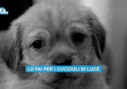 «Salvami subito»: un sms per i cuccioli abbandonati «Salvami subito» con un sms al 45589: dal 16 novembre la campagna anti-randagismo della lega italiana per la difesa degli ambienti e degli animali - Corriere Tv