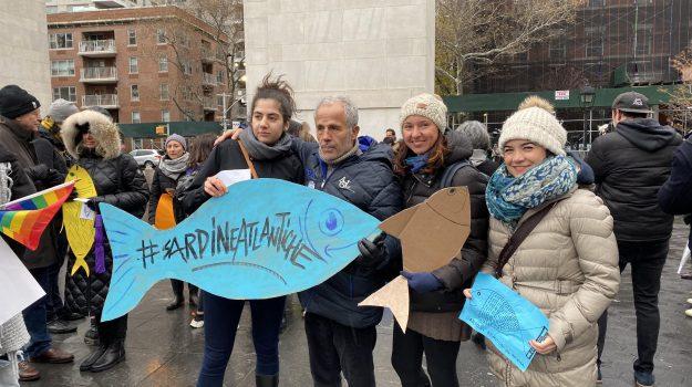 sardine, Matteo Salvini, Mattia Sartori, Sicilia, Politica