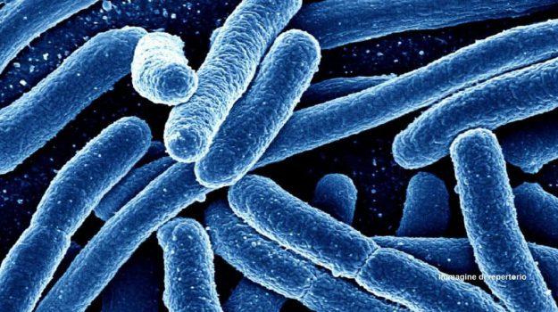 antibiotico, malattie antibioticoresistenti, superbatteri, Michael Craig, Salute e Benessere