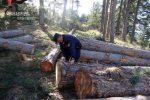 Scoperto un taglio abusivo di alberi a Spezzano Sila, scatta una denuncia