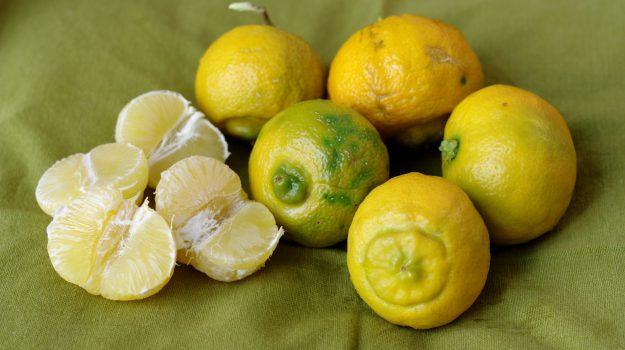 agrumi, food, limone, Terra e Gusto