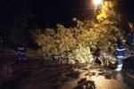 Pioggia e vento intenso in Arbëria, alberi sradicati e continui black out