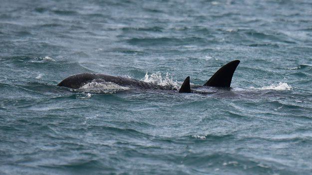 orche, stretto di messina, Clara Monaco, Messina, Sicilia, Società