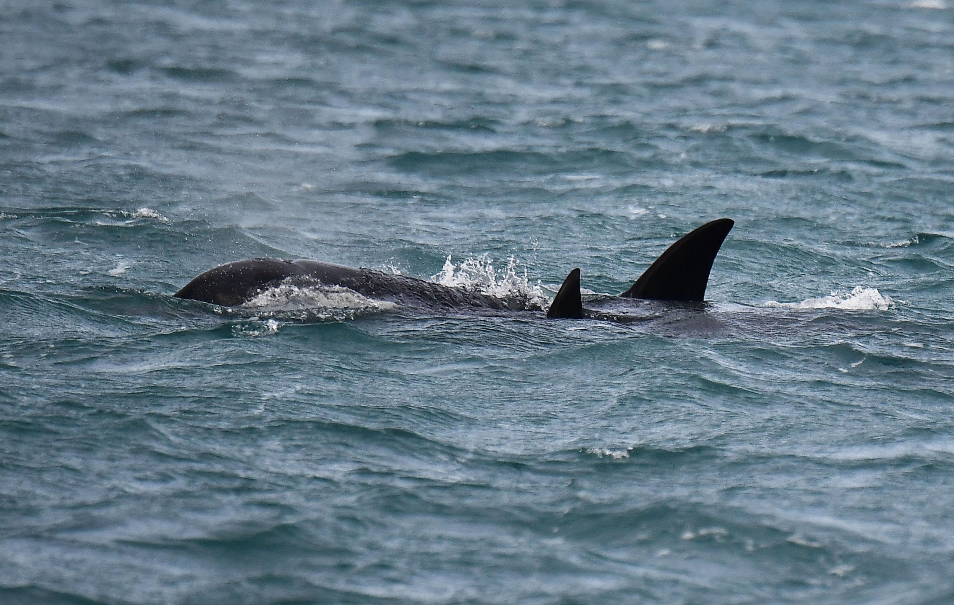 """Risultato immagini per orche"""""""