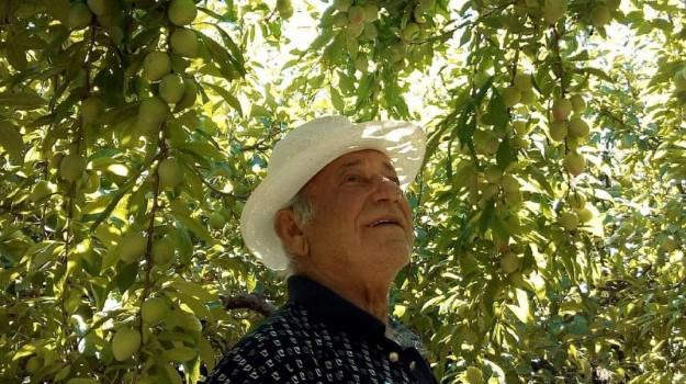 Alberi sulle colline di Ucria contro il dissesto idrogeologico: il paradiso terrestre di un 71enne