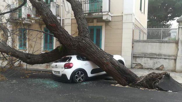"""Un albero caduto in via Buganza, quartiere """"Americano"""" nei pressi del viale Europa"""
