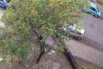 Maltempo a Cosenza, vento a 100 chilometri all'ora: alberi caduti e disagi per le strade