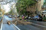 Forte vento a Messina, albero abbattuto dal maestrale in via Cesare Battisti