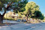 Barcellona, Commissione consultiva valuterà lo stato di salute di 1077 alberi presenti in città