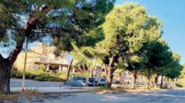 alberi, barcellona, commissione, Angelo Paride Pino, Messina, Sicilia, Cronaca
