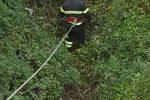 Santa Caterina sullo Ionio, salvati quattro cuccioli abbandonati - Video