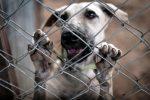 Catanzaro, 66 cani da caccia in un canile abusivo: una denuncia per maltrattamenti