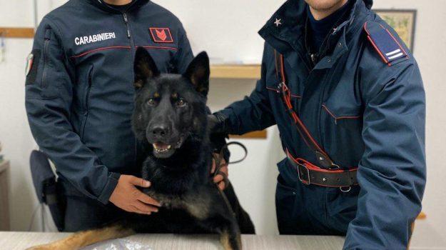 cane, carabinieri, droga, Catanzaro, Calabria, Cronaca