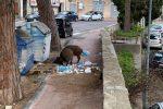 """Coppia di cinghiali """"a spasso"""" in viale Regina Elena a Messina, paura tra i residenti"""