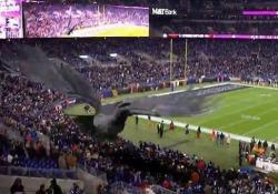 Football, un corvo virtuale vola sopra lo stadio Ai Baltimore Ravens hanno sfruttato la realtà aumentata per superare il concetto di mascotte - Dalla Rete