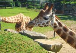 Francia, colletta da 650mila euro per comprare lo zoo e salvare gli animali Accade in Bretagna - Ansa