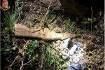 Fucile d'assalto scoperto ad Acquaro, era nascosto nella vegetazione