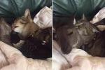Gli amici che non t'aspetti: il gatto, il canguro e la gazza