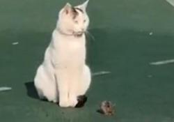 Il gatto e il topo si godono il sole insieme (dopo 10 giorni di pioggia) Il simpatico video arriva dalla Cina - CorriereTV