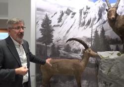 In viaggio dentro Kosmos, il museo di Pavia che racconta la natura Paolo Mazzarello, che presiede tutto il sistema museale dell'Università di Pavia, racconta come ha reso il museo un punto di riferimento vivo per la città - Corriere Tv