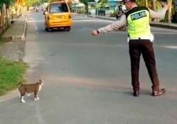 L'agente di polizia ferma il traffico per far attraversare il gatto È tornato virale il video di qualche tempo fa girato in Indonesia - CorriereTV