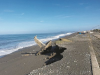 Mare più inquinato, Barcellona viene dopo Messina: tratti non balneabili per 800 metri