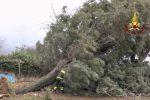 Forte vento su Cosenza e provincia, alberi abbattuti e auto travolte - Video