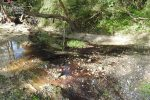 Reflui oleari in un corso d'acqua a Cirò, denunciato il rappresentante di un frantoio
