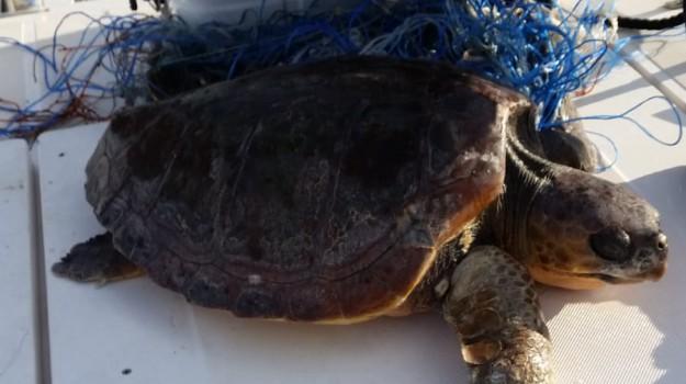 porto messina, tartaruga, Messina, Sicilia, Cronaca