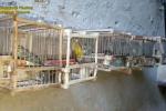 Bracconaggio e volatili detenuti illecitamente, denunciato un uomo a Campo Calabro - Video