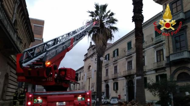 alberi, auto, rami, vigili del fuoco, Catanzaro, Calabria, Cronaca