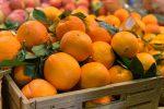 Arance e clementine di Corigliano-Rossano nel ristorante di Lino Banfi a Roma
