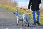 Non raccoglie le feci del suo cane dalla strada e riceve una multa da 400 euro