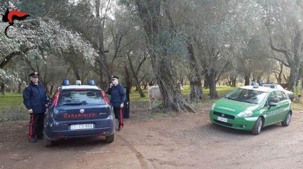 arresto, gioia tauro, palmi, taurianova, Luca Martinone, Reggio, Calabria, Cronaca