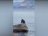 Un cormorano sullo Stretto, dopo le orche ecco un altro spettacolo della natura