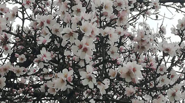 agricoltura, coldiretti, finta primavera, Terra e Gusto