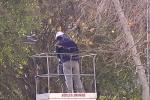 Cura del verde a Messina, appalti in corso per la potatura degli alberi