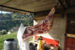In moto con un maiale appena macellato, denunciato a Messina