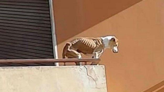 cane abbandonato, trapani, Sicilia, Cronaca