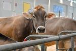 Cresce la domanda mondiale di latte