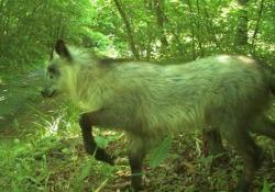 Fukushima: gli animali stanno tornando nell'area del disastro Nelle zone di esclusione gli animali stanno iniziando a ripopolare il luogo abbandonato dall'uomo - CorriereTV