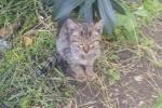 Ignoti spargono veleno davanti una colonia felina a Messina, morti 4 gatti