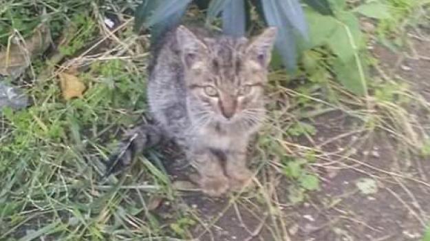 colonia felina, gatti, Franco Laimo, Massimo Minutoli, Messina, Sicilia, Cronaca